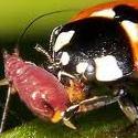 Descubra os Insectos Auxiliares